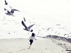 birds 250