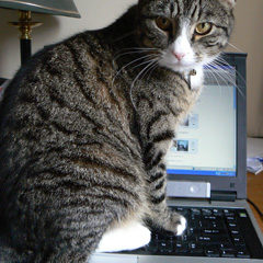 cat sitting on laptop keyboard